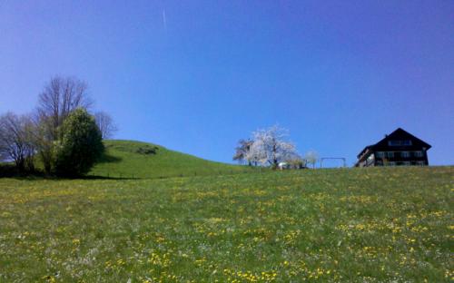 Hof bei Langenegg im Frühjahr